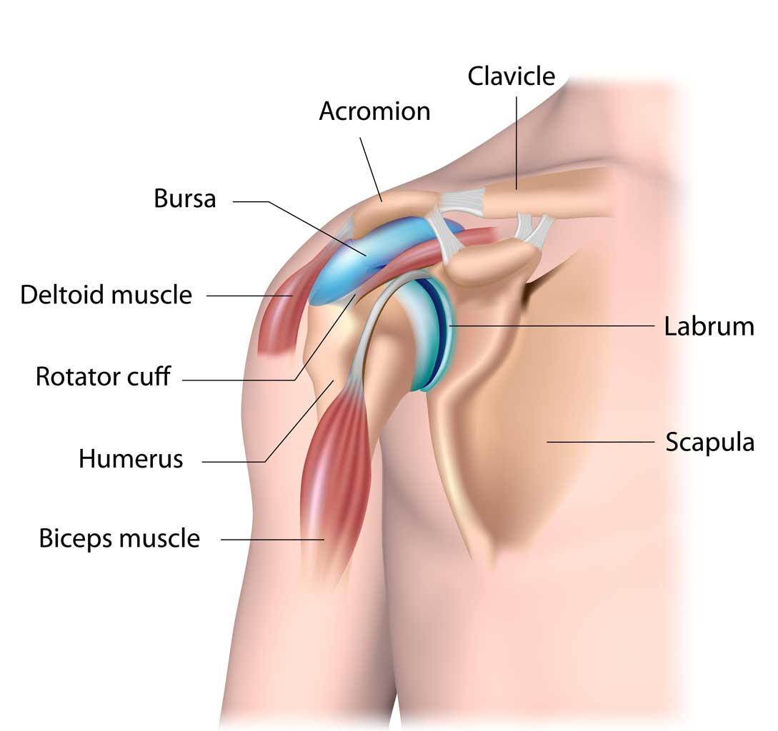 Anytime Physio treats shoulder pain from conditions such as shoulder bursitis.